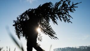 Mehrfach gesuchter Mann klaut Weihnachtsbaum aus Angebotsmarkt