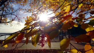 Berlin war im Herbst die wärmste Region Deutschlands!
