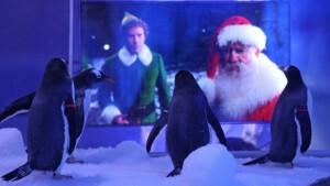 Pinguine in London schauen im Corona-Lockdown Weihnachtsfilme