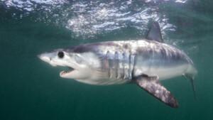Hai-Attacke auf deutsche Touristin (42) beim Tauchen in Ägypten