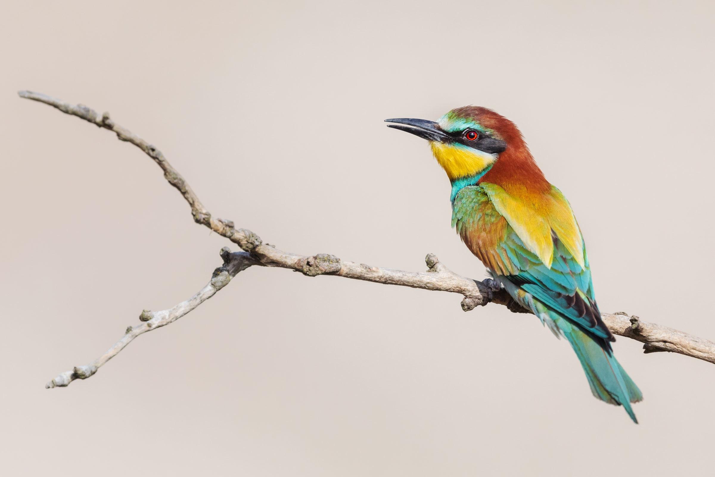 Ein Atlas zeigt, dass der Klimawandel die Vögel weiter nach Norden treibt