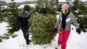 Das sollten Sie beim Kauf vom Weihnachtsbaum beachten