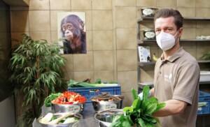 Auch Affen können Corona kriegen – nur mit Maske wird gefüttert!